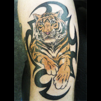Tiger and tribal tattoo, West Coast Tattoos in Blackpool